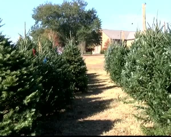christmas tree shortage
