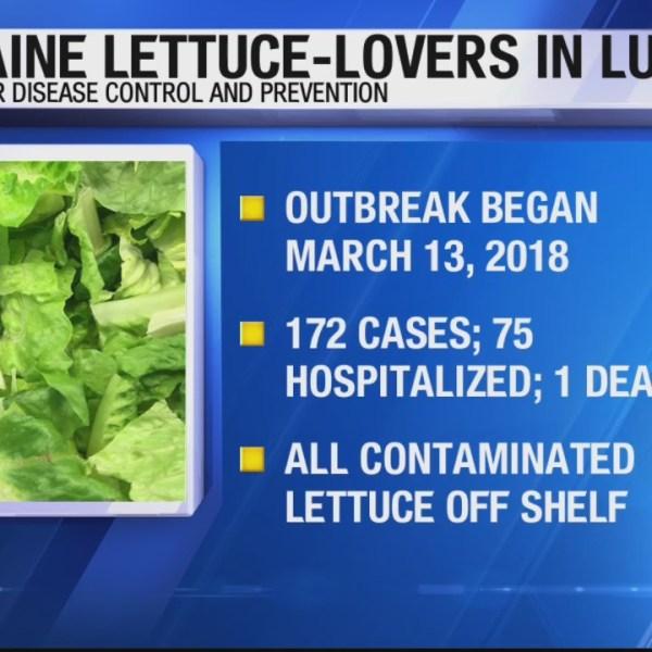 Romaine Lettuce-Lovers in Luck