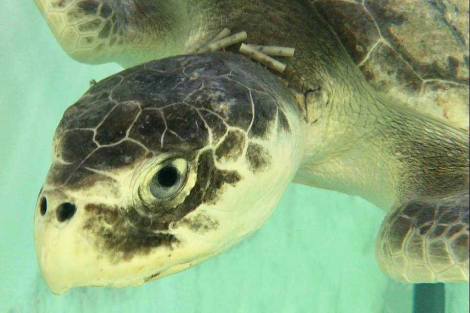 sea turtle 2_450333-842137442