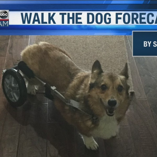 Walk_the_Dog_Forecast_Starring_Abby__0_20190227190742