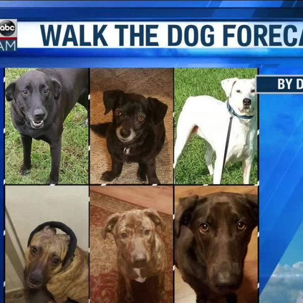Walk_the_Dog_Forecast_Starring_Sister__E_8_20190228124922