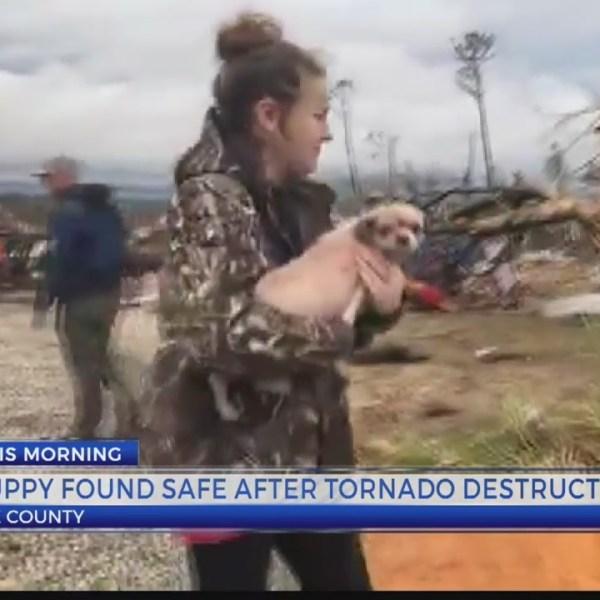 Puppy found safe after tornado destruction