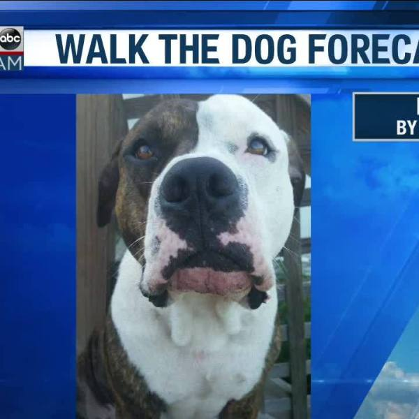 Walk_the_Dog_Forecast_Starring_Bowser__3_20190301123558
