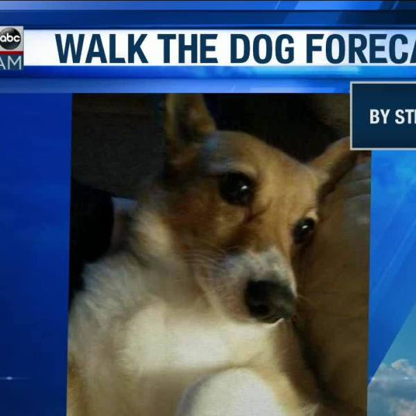 Walk_the_Dog_Forecast_Starring_Lizzy_5_20190313115419