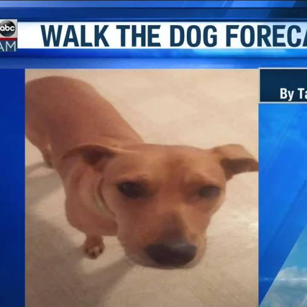Walk_the_Dog_Forecast_Starring_Pilar_3_20190305125807