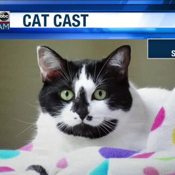 Wake_Up_Wiregrass__Cat_Cast_starring_Lil_6_20190419130625