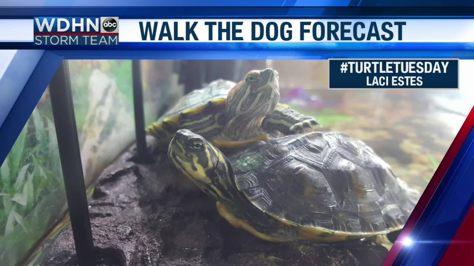Wake_Up_Wiregrass__Turtle_Tuesday_5_20190416121337