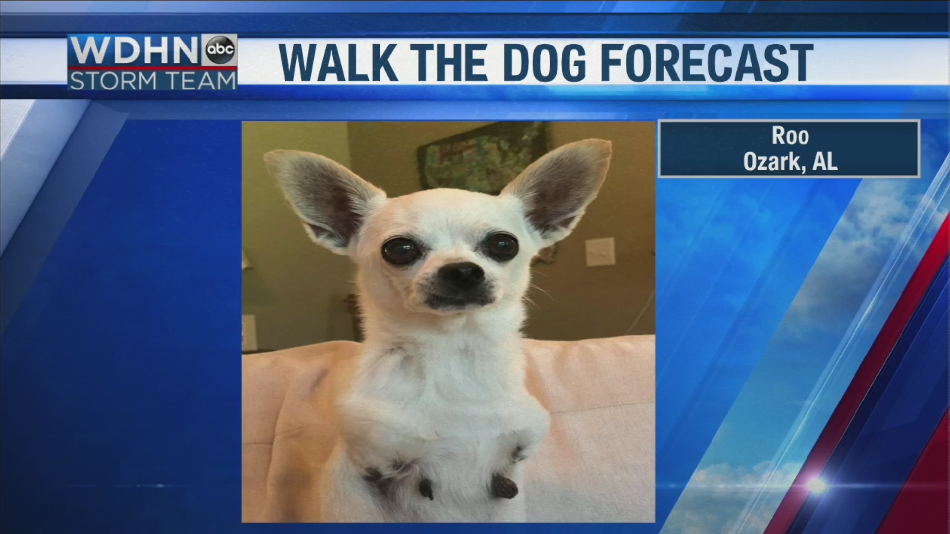 Walk the Dog Forecast Starring Roo
