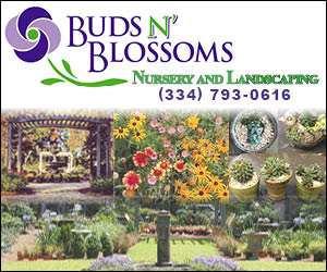 Buds N Blossoms Nursery